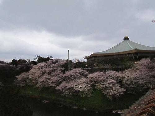 生ビールブログ -とりあえず生!--曇天模様と桜