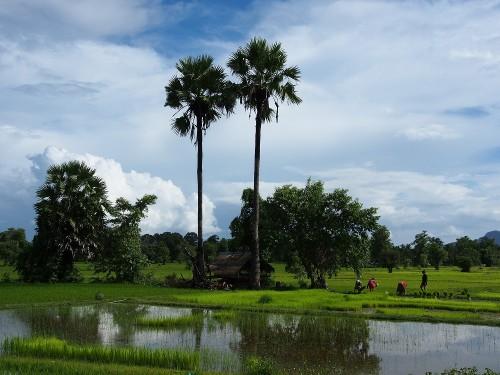 東南アジアの田園風景